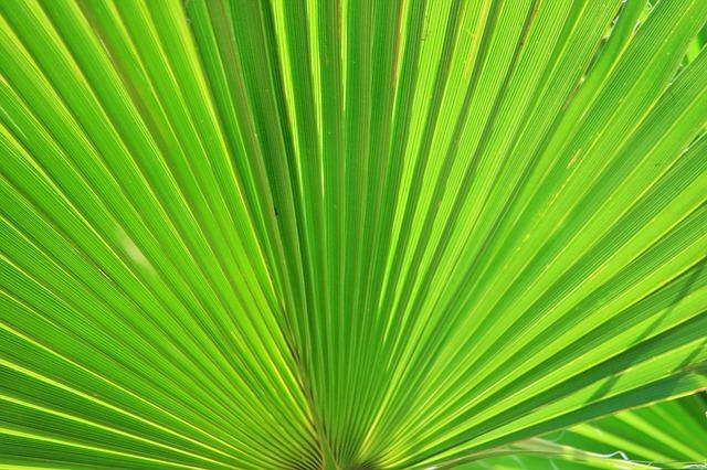 Czakramy ziemi i biblioteka liści palmowych – co skrywa przed nami magia?